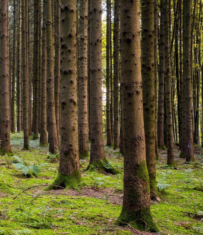 Lenzingag Wood One 42